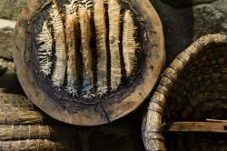 Museo dell'apicoltura Maso Plattner Foto L Thalheimer