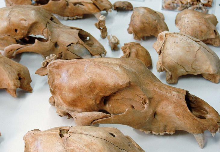 Museum ladin Ursus ladinicus