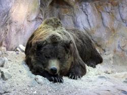 Museum Ladin Ursus ladinicus, sleeping bear
